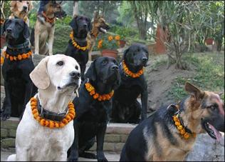 hindu dog1