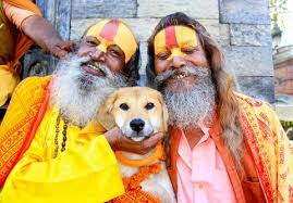 hindu dog2