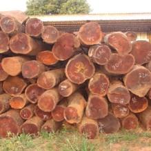 Wood-logs-0-500x5001